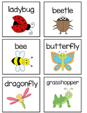 Insect Word Wall Vocabulary