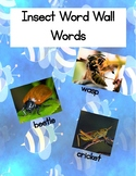 Insect Word Wall Words