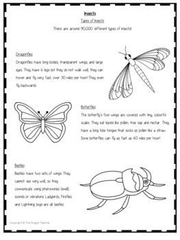 Insects Worksheet Freebie