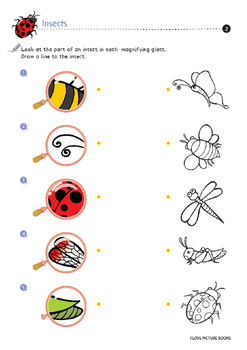 Insect Worksheets / Activities *Printables*