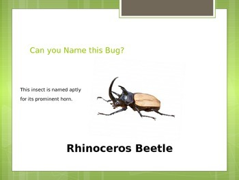 Insect World-Name that Insect