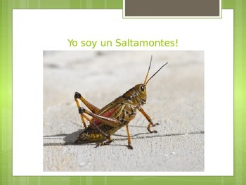 Insect World-Who Am I?-Insectos Quien Soy Yo?- Educational Game