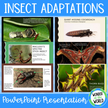 Insect adaptations PowerPoint presentation