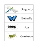 Insect Visual Aid and Matching Game Bundle