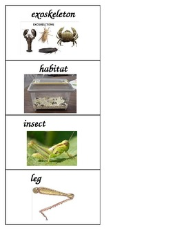 Insect and Plant Vocabulary Cards based on FOSS