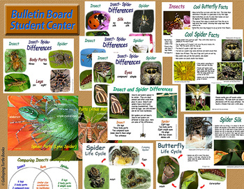 Insect and Spider Differences - Compare and Contrast