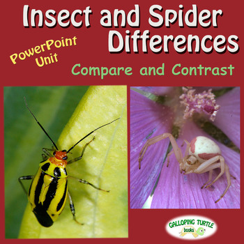 Insect and Spider Differences PowerPoint - Compare and Contrast