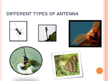 Insect booklet power point