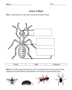Insect or Bug? Exit Ticket
