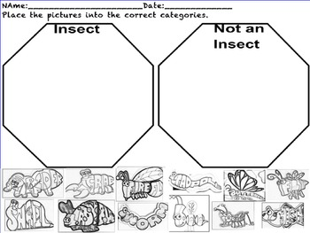 Insect or Not Insects