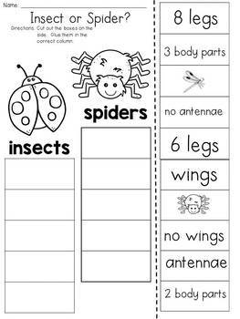 Insect or Spider? Cut and Paste Sorting Activity