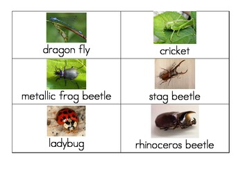 Insect pictures with names