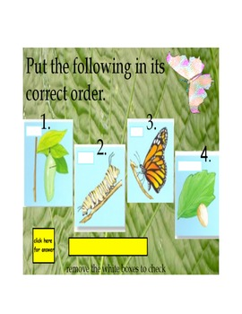 Insect review flipchart