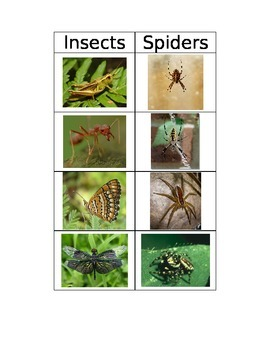Insect versus Spider