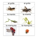 Insectos Flashcards Spanish