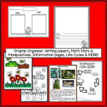 Insects - Insect Packet of  Literacy & Math Activities