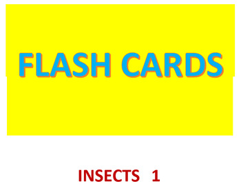 Insects 1 Flash Cards