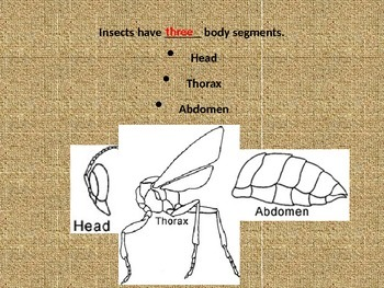Insects Powerpoint