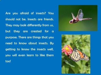 Bugs and Insects Activity | Insects PowerPoint | Insects Power Point