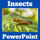 Insects | Bugs | Preschool Kindergarten 1st 2nd 3rd Grade