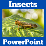 Bugs and Insects Activity | PowerPoint