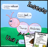 Bugs and Insects Activities | Insect Unit