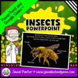 Insects Activities (Insects PowerPoint)