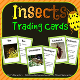 Insects Vocabulary Trading Cards
