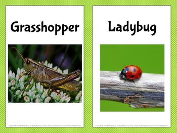 Insects Word Wall Posters