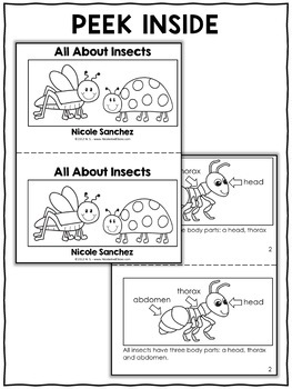 Insect Activities and Book