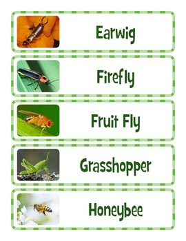 Bugs and Insects Word Wall
