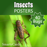 Bugs and Insects Posters