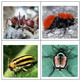 Insects 2 Flash Cards
