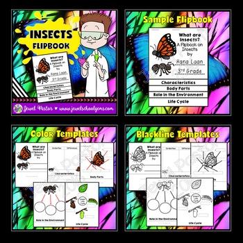 Insects Activities BUNDLE (PowerPoint, Flipbook and Bingo)