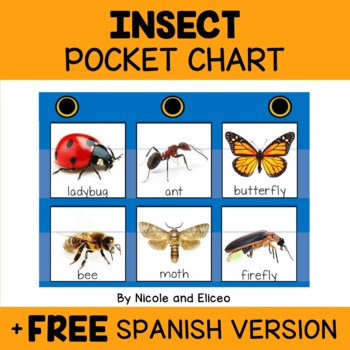 Vocabulary Pocket Chart - Insect