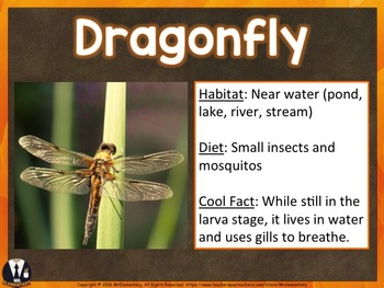 Insects PowerPoint and Posters