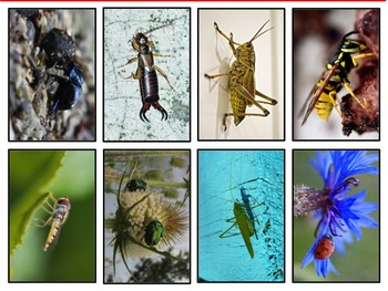 Insect Photo Cards
