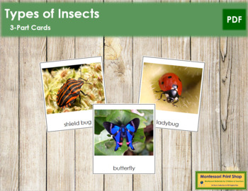 Insects: 3-Part Cards