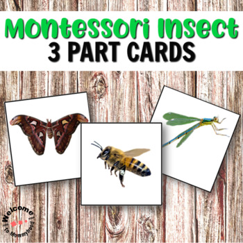 Insects 3 Part Cards for Spring Science Centers or Montessori Activities