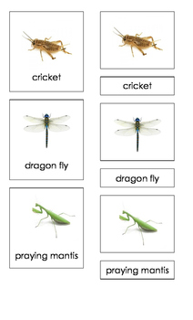 Insects (3-Part Montessori Cards)