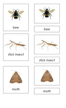 Insects (3 Part Montessori Cards) SET 2