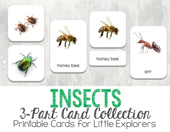 Insects 3-Part Montessori-Inspired Card Set
