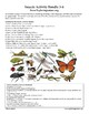 Insects Activity Bundle (Grade 3-6)
