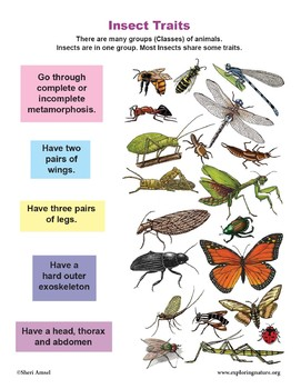 Label Parts Of Insects Worksheets & Teaching Resources   TpT