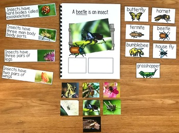 "Insects Adapted Book--""A Beetle Is An Insect"""