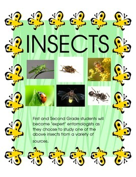 Insects - An Independent Study