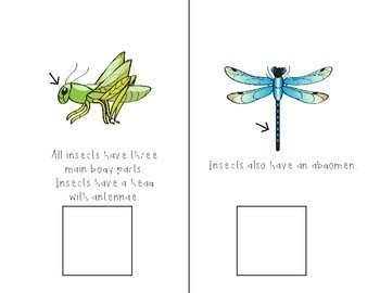 Insects Interactive Comprehension Book