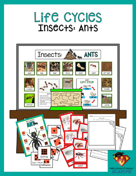 Insects: Ants (Life Cycles Pack)