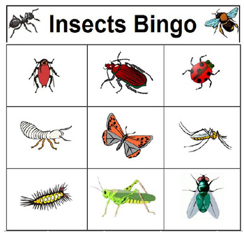 Insects Bingo