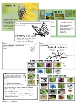 Insects Bingo and Posters